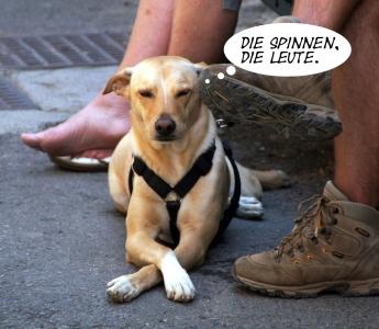 hund-text